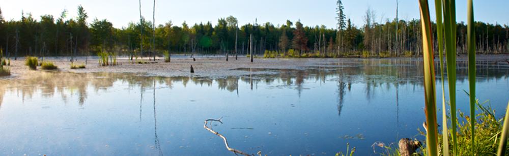 Milieux humides et hydriques en Haute-Yamaska : la MRC veut sonder la population
