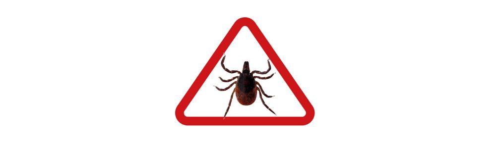C'est la saison des tiques! Prévenez la maladie de Lyme en évitant les piqûres de tiques